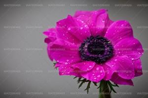 stock photo purple shaded flower